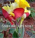 Fash Lady 20 Teile/beutel Canna Samen Mix Farben Diy Topfpflanzen Samen Indoor/Outdoor Topf Samen Keimrate Von 95% Freies Verschiffen 4