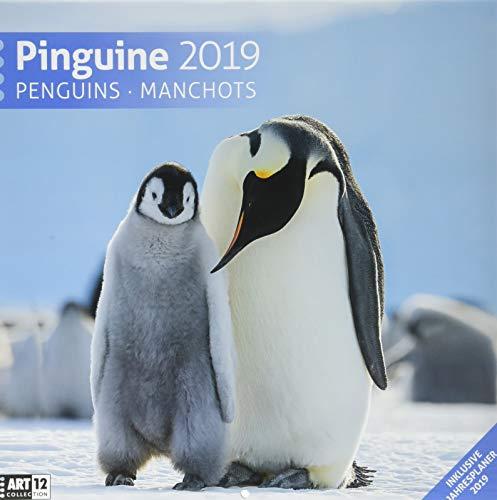 Pinguine 2019, Wandkalender / Broschürenkalender im Hochformat (aufgeklappt 30x60 cm) - Geschenk-Kalender mit Monatskalendarium zum Eintragen