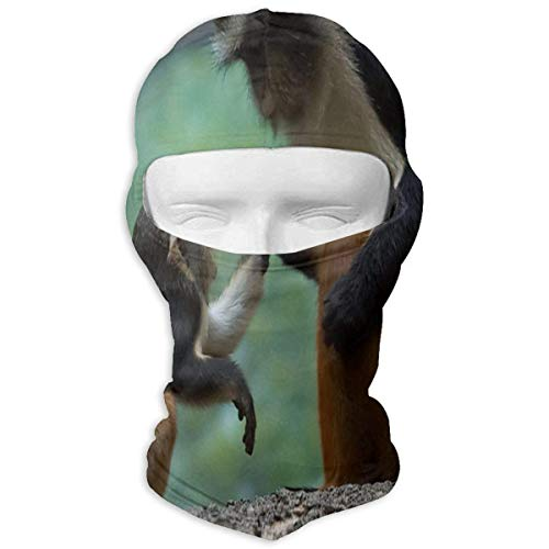 Balaclava Tender Moments Animal Little Monkey Primate Great Face Mask Motorcycling for Women (Mask Monkey Face)