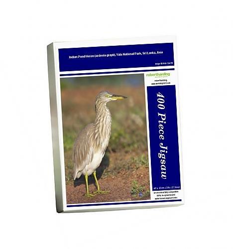 photo-jigsaw-puzzle-of-indian-pond-heron-ardeola-grayii-yala-national-park-sri-lanka-asia
