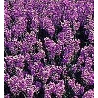 Provida Lavendelseife Bio Naturelle 80 g preisvergleich bei billige-tabletten.eu
