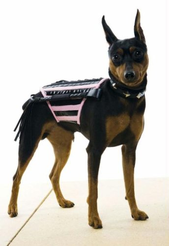 Doginatrix Pk-bk Dog Costum Md