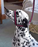 FIGURE OF 8 SOFT PADDED DOG LEAD HEADCOLLAR HALTER ALL IN ONE 2 METRE/3 METRE. ANTI PULL/TUG