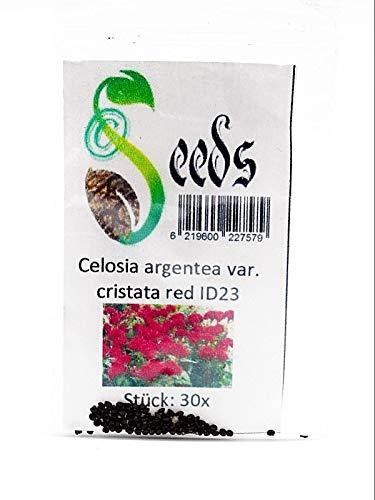 30x Celosia argentea var_cristata red Samen Hahnenkamm Strauch Garten ID23
