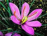 Vente 200 pièces Safran Fleur Végétaux, Safran Bulbes, Bonsai Fleur Iran Crocus pour Plantes en Pot Jardin Décoration Bonsai: 19...