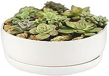 Maceta, Ruimeng moderno minimalista blanco cerámica maceta suculentas