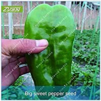 ASTONISH SEEDS: ZLKING 100pcs Vegetable Seeds Pimienta del jardín Bonsai Alimentos Fácil Crecer no gmo Planta vegetal orgánico