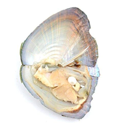 lhwy-moda-1-5-10-15-20pcs-7-8-mm-ostras-con-gran-perla-ovalada-dentro-de-regalos-de-cumpleanos-1