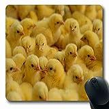 Tappetini per il computer per l'industria agroalimentare Yellow Baby Little Chickens Farm Wildlife Hen Technology Tecnologia Pollame Incubatrice Incubatrice Antiscivolo Mouse da gioco oblungo