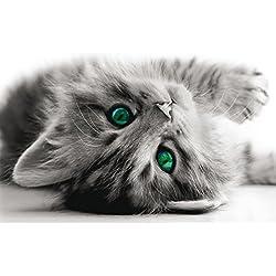 BilligerLuxus - Póster (160 x 115 cm), diseño de gato, color gris, negro y blanco