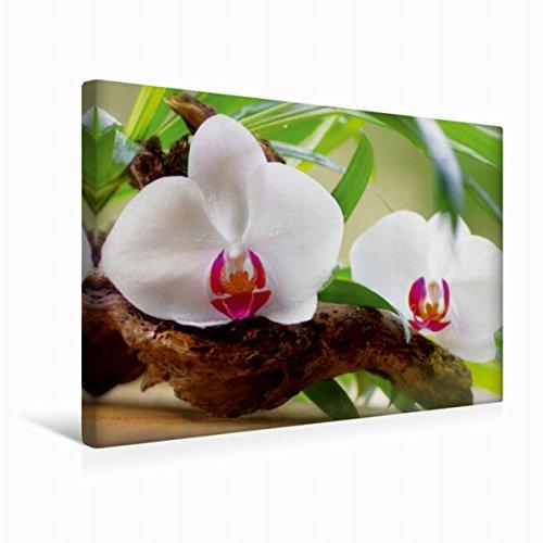 Calvendo Premium Textil-Leinwand 45 cm x 30 cm quer Orchidee Oase | Wandbild, Bild auf Keilrahmen, Fertigbild auf echter Leinwand, Leinwanddruck Gesundheit Gesundheit