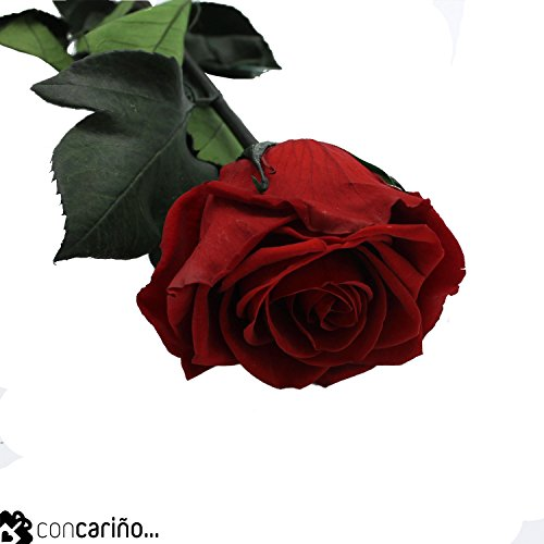 Rosa -Eterna Preservada- (Roja) Vibrant Red 50CM-6-6.5 DIAMETRO CABEZA ROSA