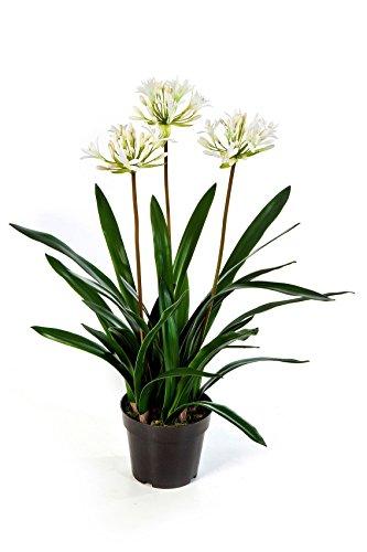 artplants Künstliche Agapanthus SIPHIWE mit 3 cremefarbigen Blütendolden, 75 cm – künstliche Blume/Kunstpflanze