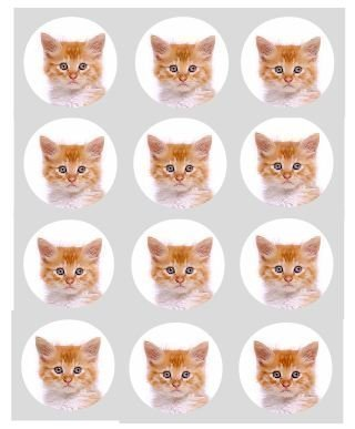 12-Chaton-Gingembre-chat-papier-de-riz-fe-cup-cake-40mm-toppers-Pr-Dcoup-dcoration