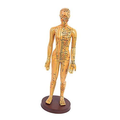 MagiDeal Akupunktur Puppen Akupunktur-Figuren Meridianpuppen Lehrfiguren Körper Modell Kleine Bronze Modell - Frau 2