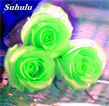100 pièces / sac Couleur Rare Rose Graines Outdoor Bonsai Graines de fleurs vivaces Fleurs Graines Plante en pot pour jardin Décor 13