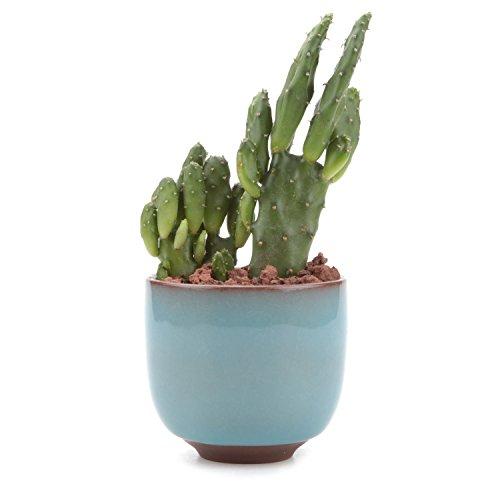 t4u-65cm-ceramic-ice-crack-zisha-raised-serial-sucuulent-plant-pot-cactus-plant-pot-flower-pot-conta