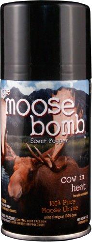Buck Moose bombe vache en chaleur