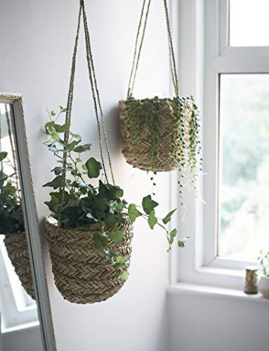 Wild Vert doigts Naturel Jonc de mer à suspendre Pot de fleurs - Fait à la main Intérieur support de pot de fleurs - pour Succulents, Air plantes herbes et petit Cactus