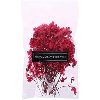 Hellery Nat/ürliche Echte Getrocknete Gepresste Bl/ätter Blumen F/ür Kunsthandwerk Kerze Seifenkarten A