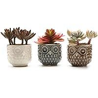 T4U 7CM Pots En Céramique le motif d'hibou Série/Plante Succulente/Plante en Pot/Cactus/Pot De Fleur/Cultive 1 paquet de 3