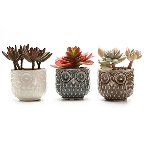T4U 7CM Keramik Sukkulenten Töpfe Kaktus Pflanze Töpfe Mini Blumentöpfe mit Eule Muster 3 Farben 3 Stücke Set