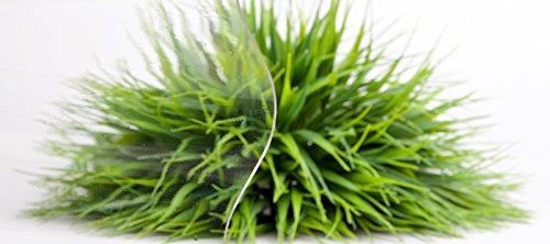 Lichtplatte | Wellplatte | Lichtwellplatte | Profil 177/51 | Material Acrylglas | Breite 920 mm | Länge 1,60 m | Stärke 3,0 mm | Farbe Glasklar