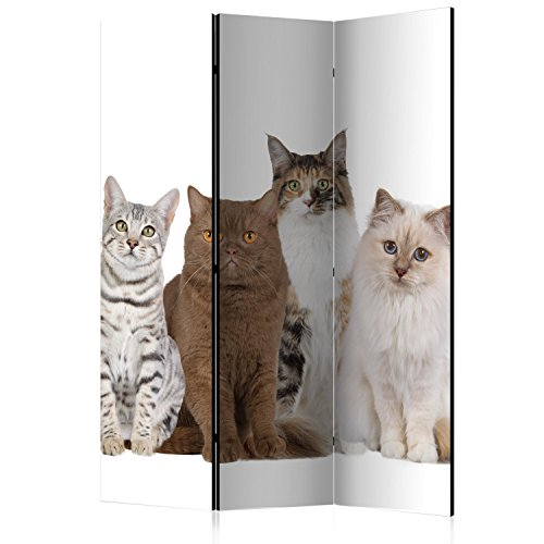 murando - Biombo con Tablero de Corcho - Gato 135x172 cm - de impresión Bilateral - Lienzo de TNT Foto Biombo Decorativo para Interiores - weiß Braun g-B-0066-z-b