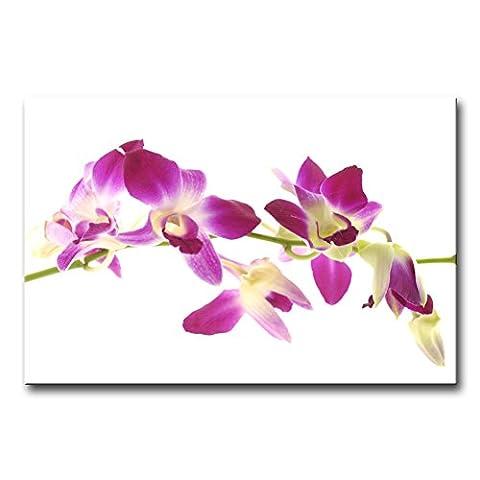 Leinwanddruck Bild Blumen in lila und weiß pink Schmetterling Orchideen Violett Garten-Levkoje auf weißem Hintergrund Moderne Giclée-gespannt und gerahmt Artwork die Blume Bild Foto Druck