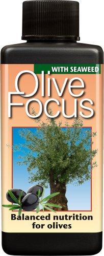 olive-focus-liquid-concentrated-fertiliser-100ml
