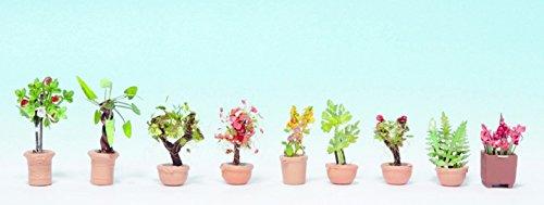 noch-14082-zierpflanzen-in-blumenkbeln