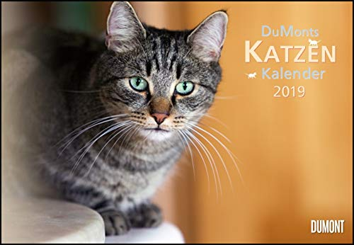 DuMonts Katzenkalender 2019 - Broschürenkalender - Wandkalender - mit Schulferienterminen - Format 42 x 29 cm: mit kurzweiligen Katzengeschichten