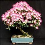 100 / bag Bonsai Profumi Albizia semi di fiore Mimosa semi seta albero fiorito lungo bonsai mini albero semi, piante in vaso