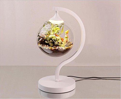 Kreative ökologische Energieschutz Augenlampe Miniatur Landschaft Pflanze Wertschätzung Geschenk Lampe Mikro-ökologische Aquarium Tischlampe (43*27*20cm, white)