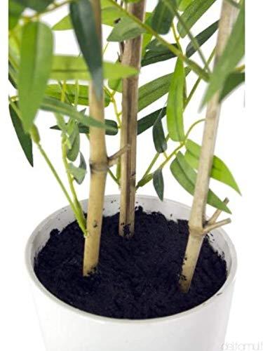 Closer To Nature Kunstblumen 2FT Grün und Weiß Dragon Tree Pflanze-Künstliche Seide Pflanze und Baum Serie, grün, 60,1 cm