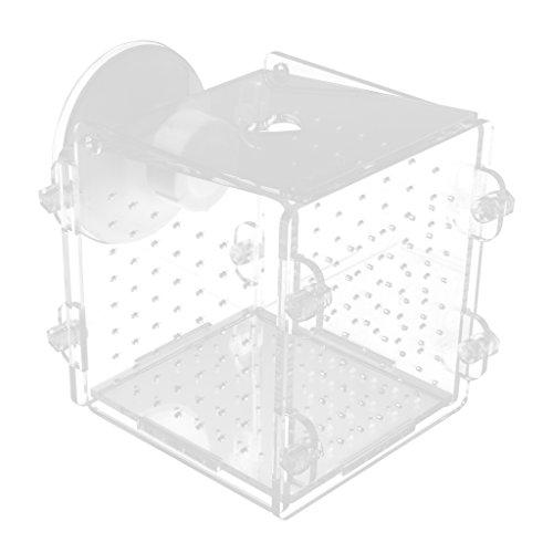 Homyl Aquarium Acryl Fisch Isolation Box Brutkasten Züchter Tanks mit Saugnäpfe / Haken zum Aufhängen - Loch - Typ