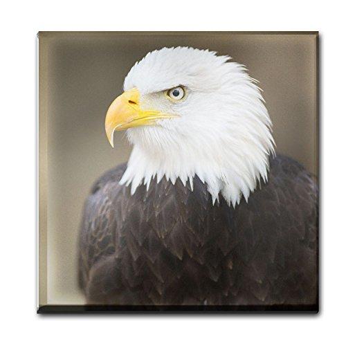 Bald Eagle Animal Glas Untersetzer 008