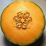 Fash Lady 30 + Amish Melon Samen Heirloom Cantaloupe Offen bestäubten Muskmelon Flavour Garden