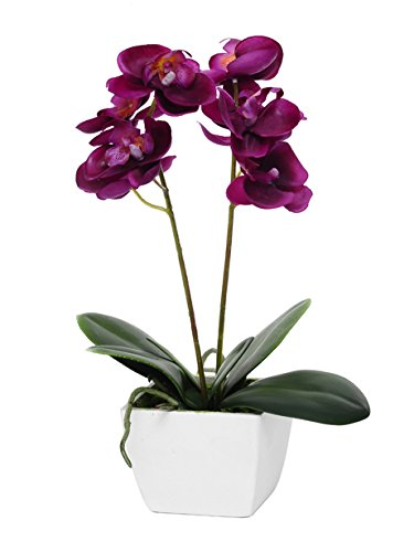 country-baskets-mini-fuchsia-potted-orchid-pink