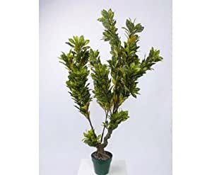 Aucuba, arbre, dans pot en plastique Hauteur env. 125cm-Art arbres Arbre artificiel faux arbres art plantes Art Palmiers Déco Palmiers