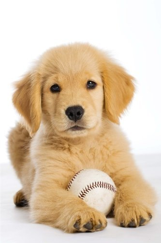 Golden Retriever Puppy with a Baseball Journal: 150 page lined notebook/diary by Cool Image (2016-08-18) (Golden Baseball Retriever)