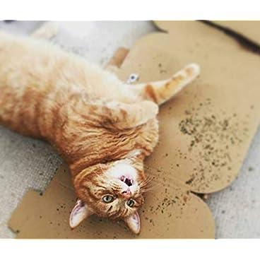 Cat FurNature .co .uk Extra Strong Catnip