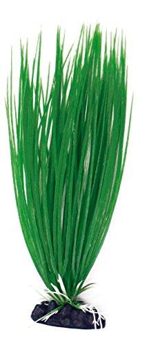 wave-acorus-plante-classique-pour-aquariophilie-taille-m