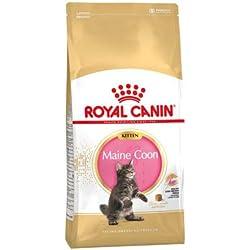 Royal Canin - Kitten Maine Coon 36 / Maine Coon 4 à 15 Mois - Sac de 400G