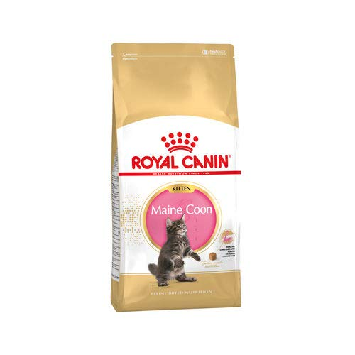 Royal Canin Kitten Maine Coon, 1er Pack (1 x 2 kg)