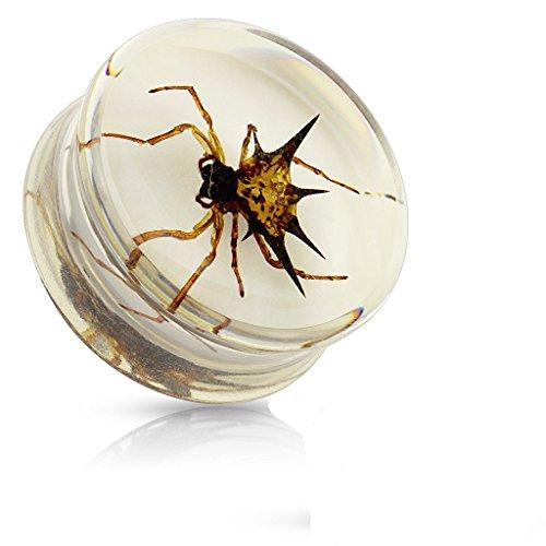 18mm Echt Insekt Spinne in Polyharz Ear Sattel-Plug-Tunnel Piercing-Qualitäts-Materialien / Encased Spider ist Gasteracantha Sp (Spider Kostüme Für Den Hund)
