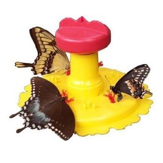 2PK Butterfly Feeder 2PK Butterfly Feeder 41XskxzeKOL