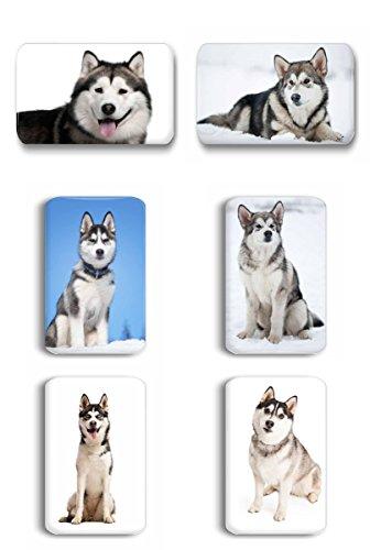 Siberian Husky / Alaskan Malamute / Schlittenhund - 6 rechteckige Kühlschrankmagnete 7x 4,5 cm -- 01 für Memoboard Pinnwand Magnettafel Whiteboard