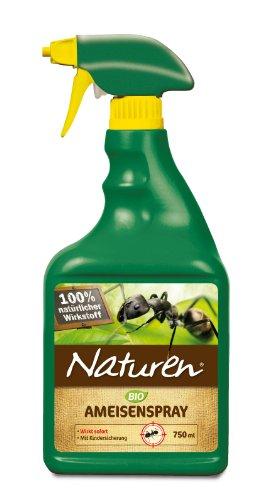 #Ameisen im Haus oder in der Wohnung#