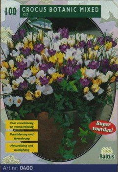 100 Botanische Krokusse gemischt von Baltus Blumenzwiebeln auf Du und dein Garten